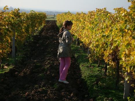 Vrsacki+vinogradi